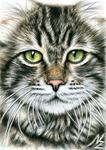 Art by Arts And Dogs : Arts And Dogs - Cats Face